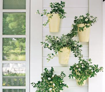 Consider going vertical with your container garden. Plants can enliven a bare wall & bringing them to eye level makes them easier to enjoy. Design tip: An even number of plants results in a formal look; odd numbers have a more loose & natural appearance. Here, 5 glazed ivory pots are planted with trailing white flowers; the white-on-white color scheme is clean and relaxed