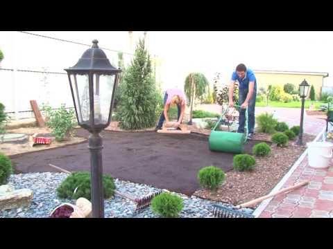 Как правильно делать газон на даче 45 фото плюс видео ...