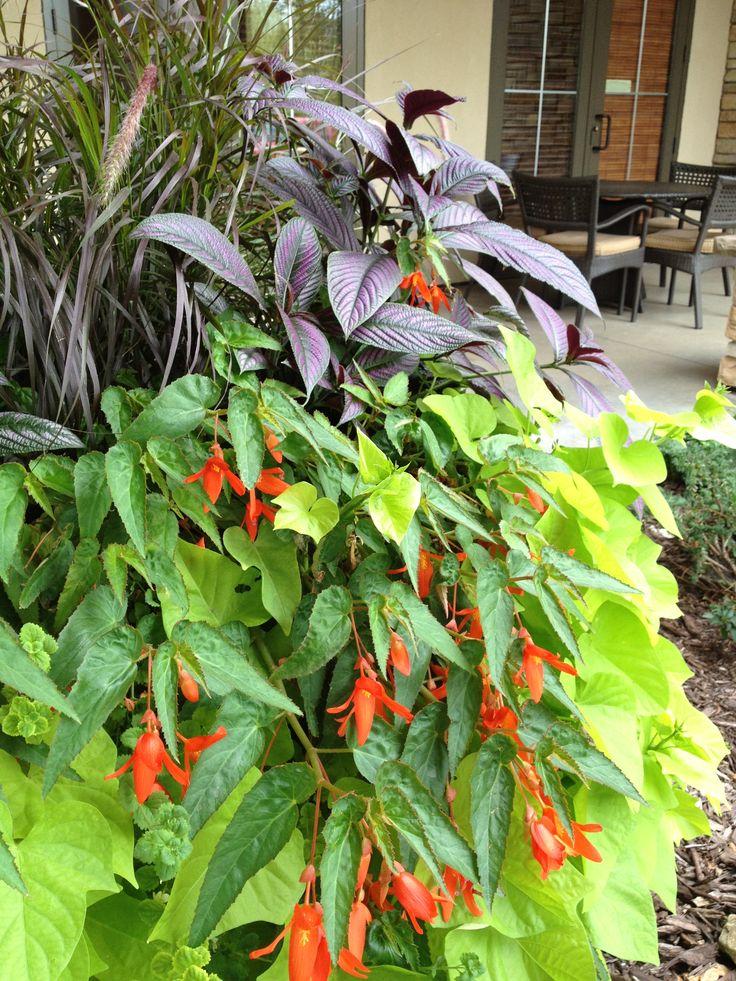 Waterfall Begonia, Sweet Potato Vine, Shade Summer Planter, Sarah's Cottage Creations