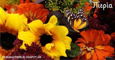 Πιερία: Καλημέρα Κατερίνη, καλημέρα Πιερία