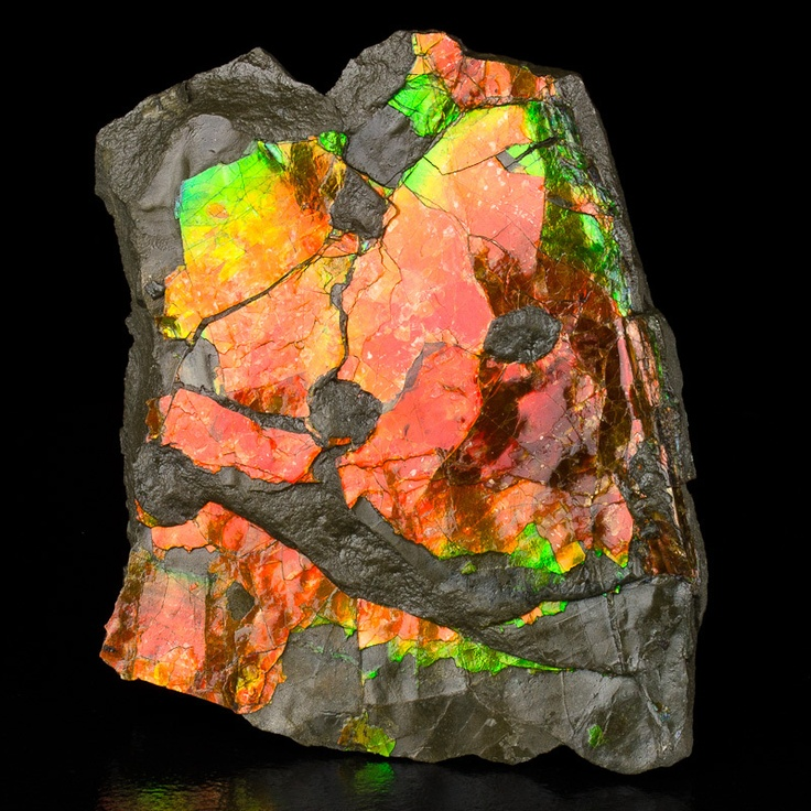 Ammolite - CanadaNature'S Gem, Flashy Iridescent, Green Ammolite, Ammolite Fossils, Iridescent Red, Fossils Ammonite, Red Orange, Orange Green, Ammonite Canada