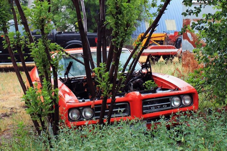 Treed Goat Recovered: Pontiac GTO Judge - http://barnfinds.com/treed-goat-recovered-pontiac-gto-judge/