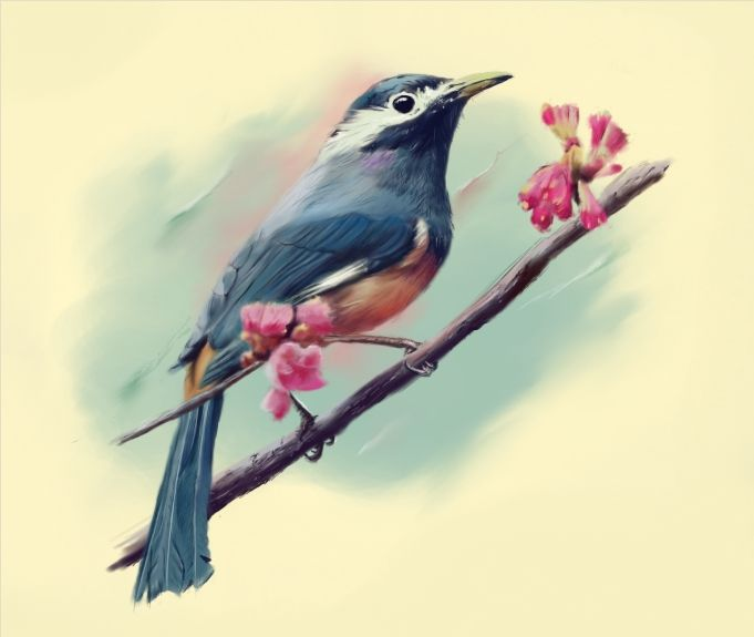 Another bird and cherry blossoms - Digital drawing