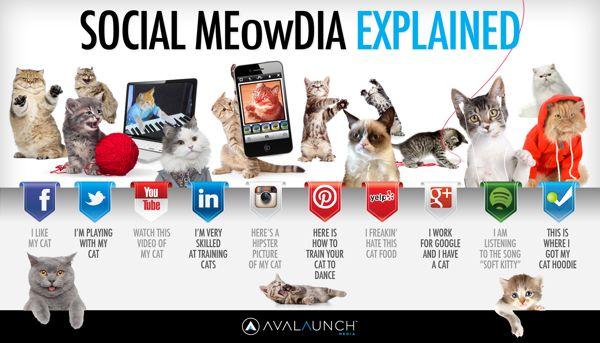 Social Media Explained Cat infographic