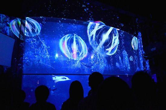 新江ノ島水族館が10周年!夜の水族館を楽しむ特別企画「ナイトアクアリウム」