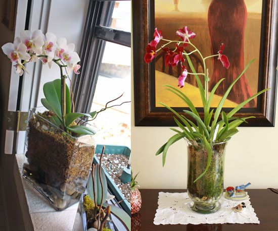 It's such a simple process, and I've now converted all my orchids into terrariums. When they are in bloom it's an absolutely gorgeous way to display their beauty.
