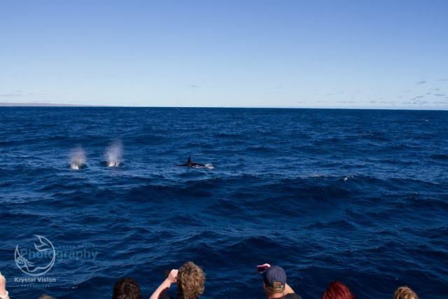 Orcas, Exmouth