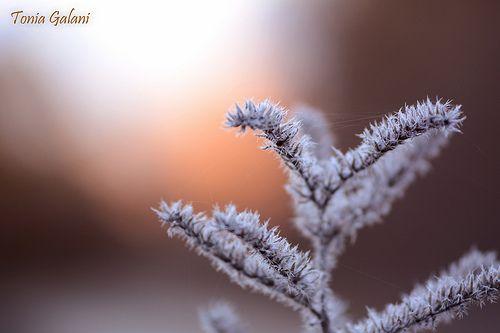 Snowy spirit ...