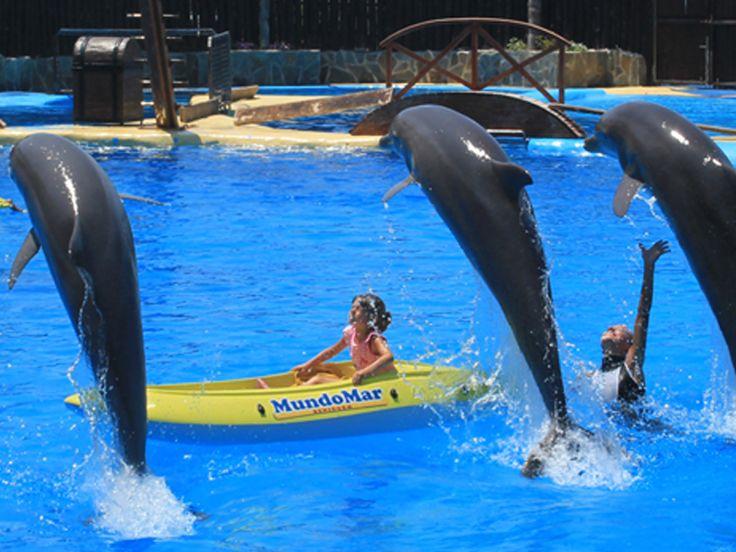 Mundomar - akvarium m/delfiner ved Benidorm