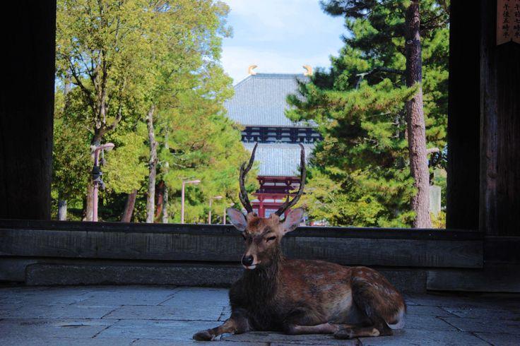 https://flic.kr/p/LRMsnQ | Tōdai-ji - Nara | Il Tōdai-ji  -  Grande tempio…