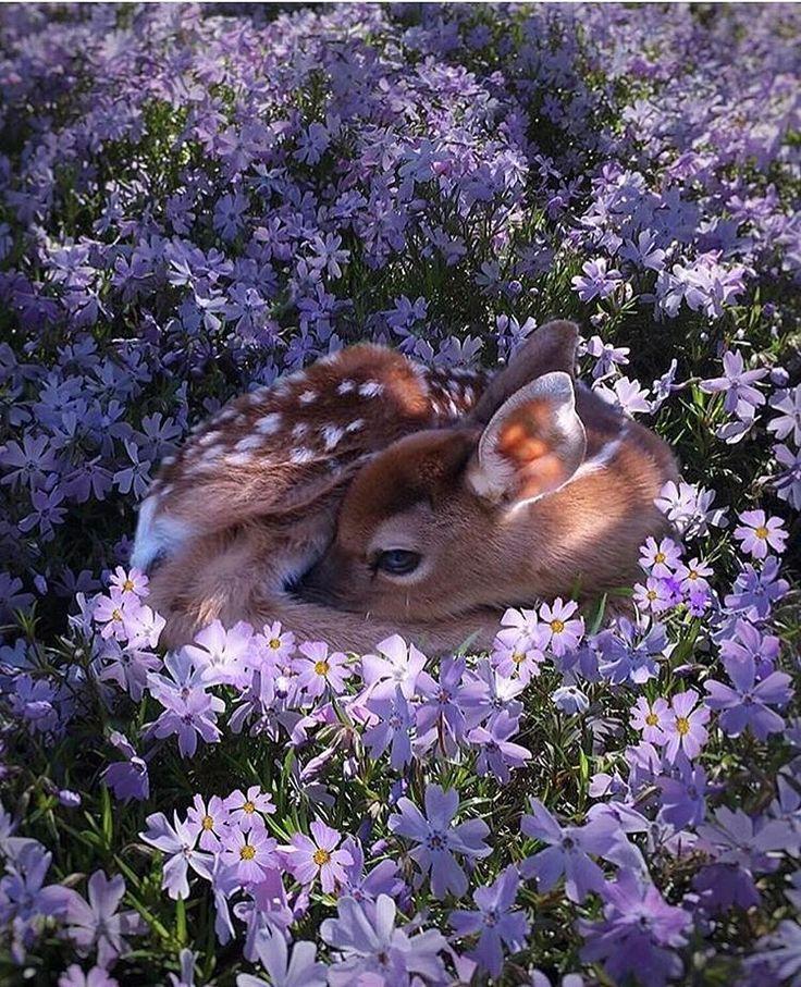 いいね!24.4千件、コメント174件 ― FANTASTIC EARTHさん(@fantastic_earth)のInstagramアカウント: 「Cute Photo by @fuzzyfawn  #fantastic_earth」