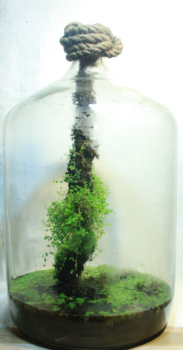 Best 20 mini terrarium ideas on pinterest for Terrario vertical