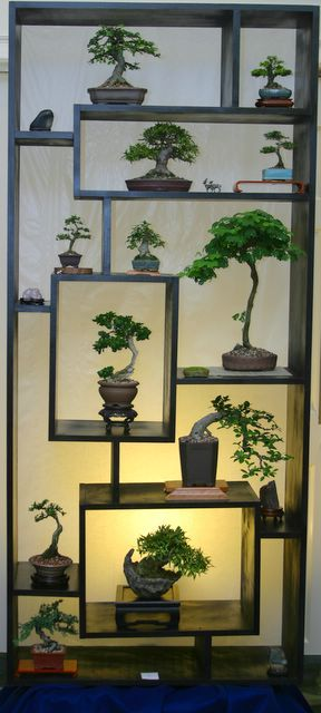 Shohin & mame making a BIG impact on multi-level bonsai display stand complimented w/ suiseki.                                                                                                                                                     More