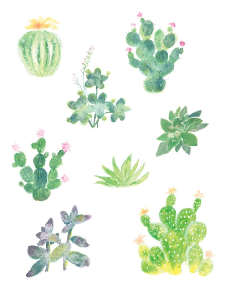 Watercolor Cacti and Succulents Watercolor by WatercolorPaperie