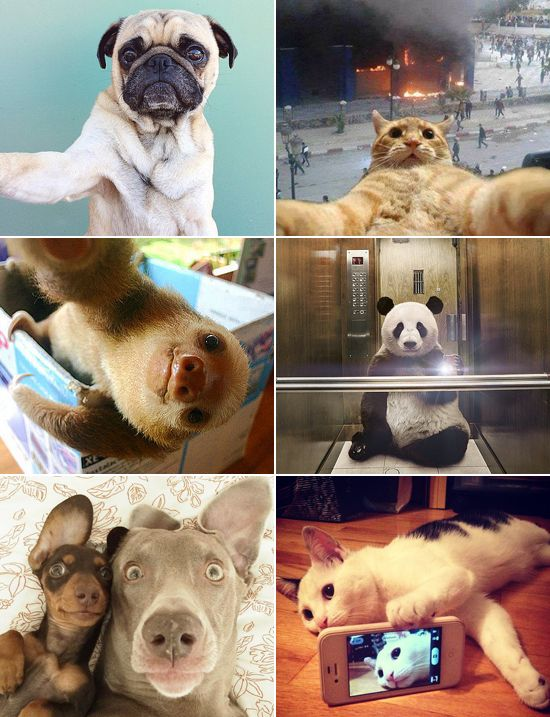 Best Animal Selfies Images On Pinterest Selfies Adorable - The 21 best animal selfies of all time