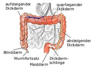 Dickdarm | Anatomie - gesundheit.de