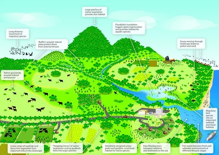 National Wildlife Corridor