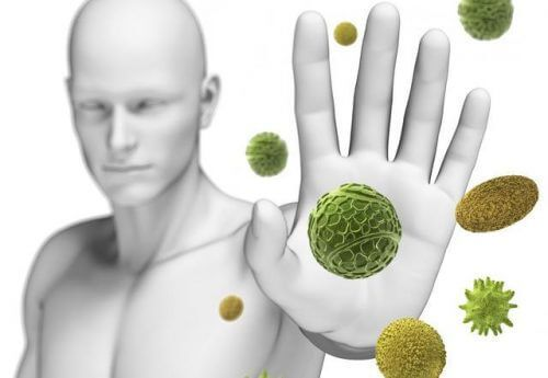 Renforcez naturellement votre système immunitaire grâce au pleurote en Huître - Améliore ta Santé
