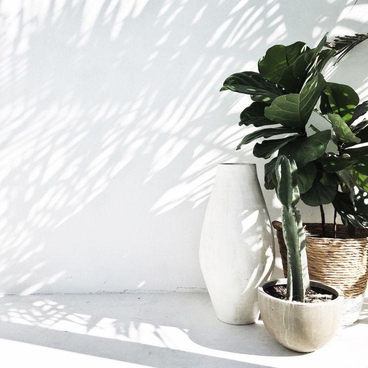 Bauwerk Colour Whitewash | Garden Design Mon Palmer | Bauwerk Colour Lime Paint