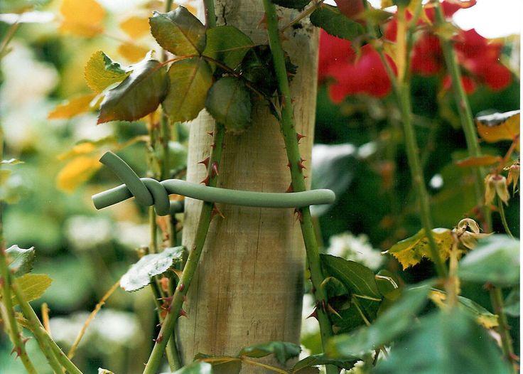 Foamdraad, groen met gegalvaniseerde kern op rol van 5m.  Het zachte materiaal er omheen beschadigt uw kwetsbaarste planten niet, maar een stevige uitloper of tak is er ook prima mee vast te zetten. Door een grote boog te buigen en die vervolgens op een stokje te draaien, maakt u een steun waar solitaire stelen vrij in kunnen bewegen en groeien, zonder dat het steeltje wordt doorgesneden of knakt. Als functioneel ook leuk mag zijn.