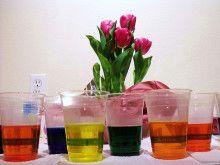 egg-dyes