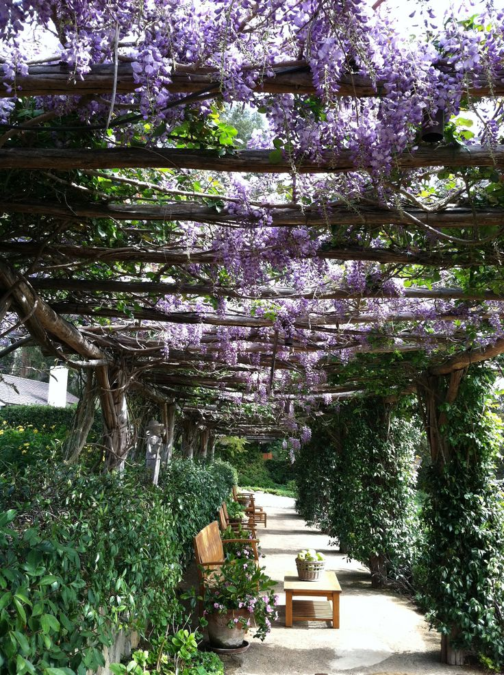 """Huntington Gardens trellis overlooking the Japanese Gardens, in full bloom. A perfect place to read a book and experience """"that moment."""" If only I lived closer I'd become a member just to enjoy lunch here."""
