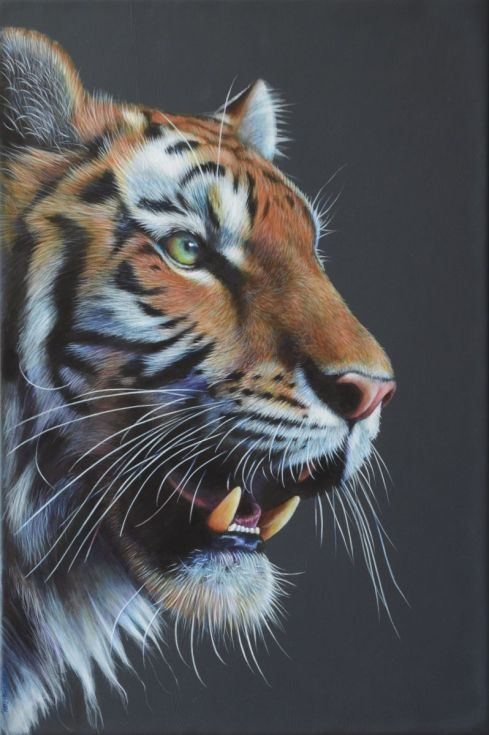 """ARTFINDER: Tiger Masterful by Karl Hamilton-Cox - An original Tiger painting, box-framed and ready to wall hang, measures 12x18"""".  Reserved for my solo exhibition in Hereford until 6 September 2015."""