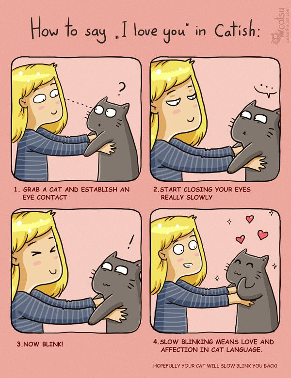 ❤ =^..^= ❤     | Catsu The Cat