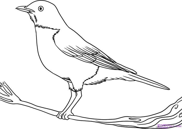 Quail Line Art : Best images about bird study on pinterest coloring
