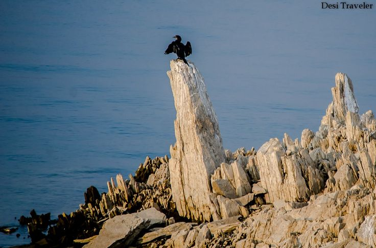 A little cormorant sitting on a stone