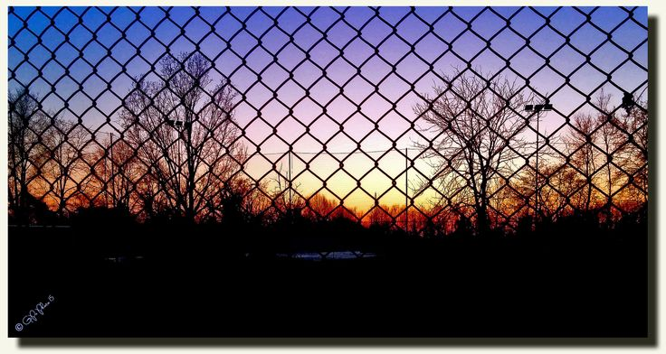 the sun in the cage......