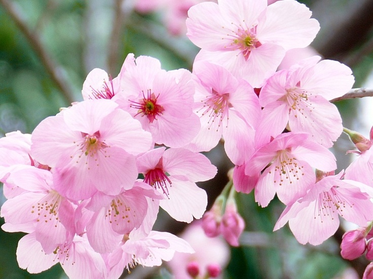 Stardust English Talk: Vernal Equinox Day Joy. Also known as the Spring Equinox or Shunbun No Hi, the Vernal Equinox Day is a Japanese public holiday that is observed every year on March 20th or 21st.
