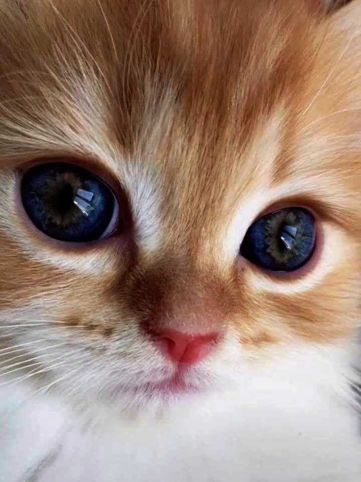 Cute Animals Iphone Wallpaper Cute Cats Kittens Wallpaper Hd