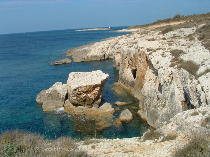 The Adria