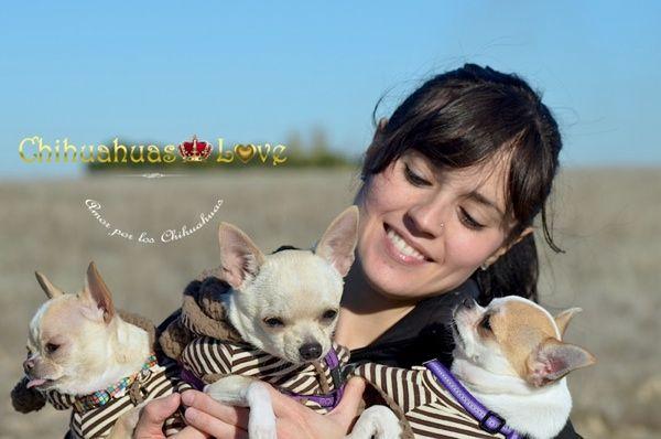 Chihuahuas Love - Los Perros Chihuahua Son Buenos para El Alma. Virtudes de Los…