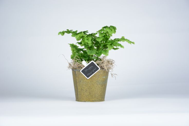 """Bring home some green! The 4"""" ferns are a green plant in a tin pot. With a petite blackboard for a personalized message."""