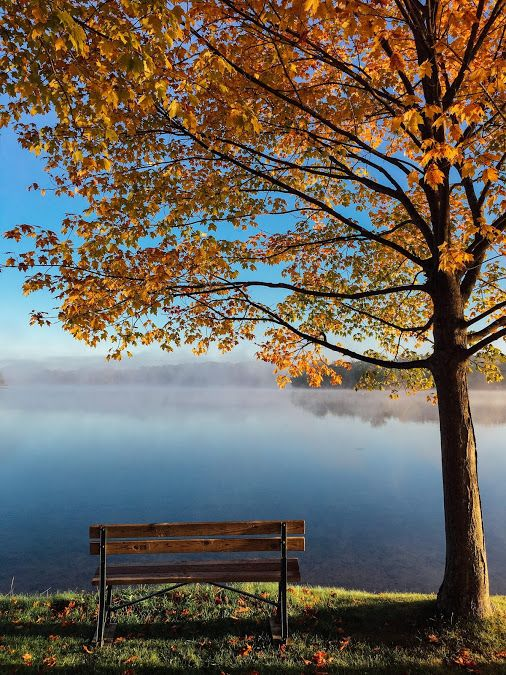 Помните, тишина — иногда самый лучший ответ на вопросы.  © Далай-лама