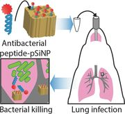 Porous Silicon Nanoparticle Delivery of Tandem Peptide Anti-Infectives for the Treatment of Pseudomonas aeruginosa Lung Infections - Kwon - 2017 - Advanced Materials