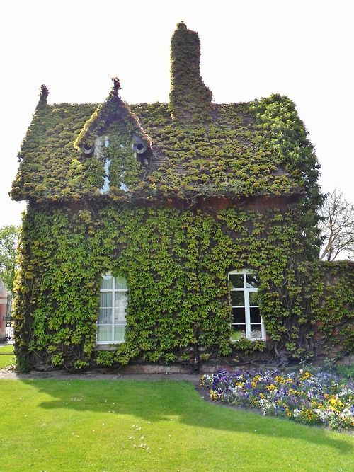 luthienthye:  Via Valorie Phillips-Keeton - Boston Ivy covered cottage in Dartmouth Park, Sandwell, England