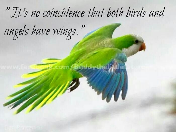Parrot Bird Quotes And Sayings Wwwpicswecom