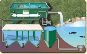 25 best ideas about pond filter system on pinterest for What is the best koi pond filter system