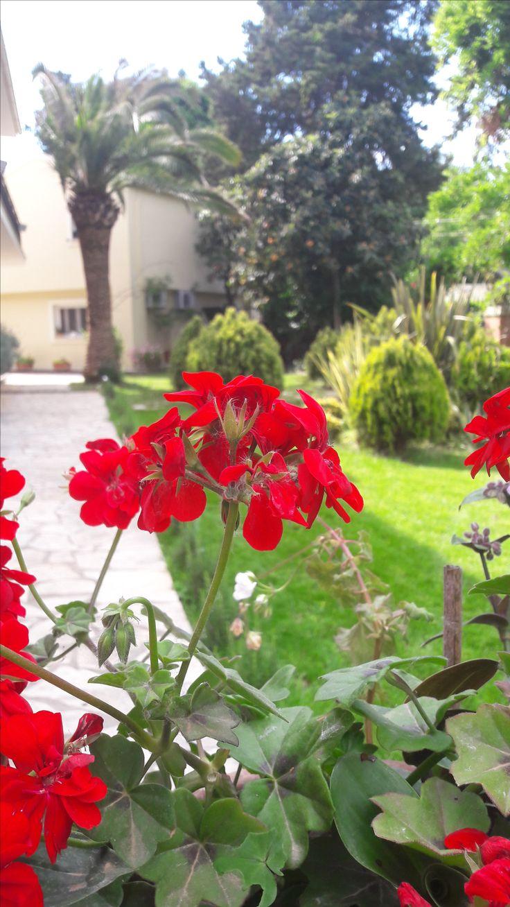 Flowers | Dassia, Corfu Greece