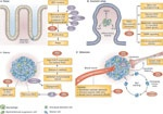 Aspirin as adjuvant therapy for colorectal cancer (Credit:  Whay Kuang Chia et al, Nature Reviews Clinical Oncology) #NPG Nature Publishing Group