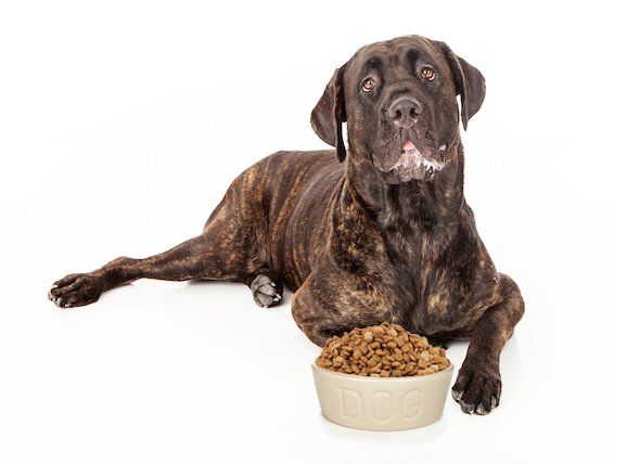 In the GUARANTEED ANALYSIS look for the Protein content to be at least 30 percent, the Fat to be at least 18 percent, preservatives to be via Vitamin E and/or C and look for Omega Fatty Acid to be present. Supplementation can be harmful, especially calcium supplementation to a pregnant bitch. If a good quality dog food is being fed no special supplementation should be needed. If a supplement is required to make the dog look or feel better or whelp healthier pups, you should instead change…