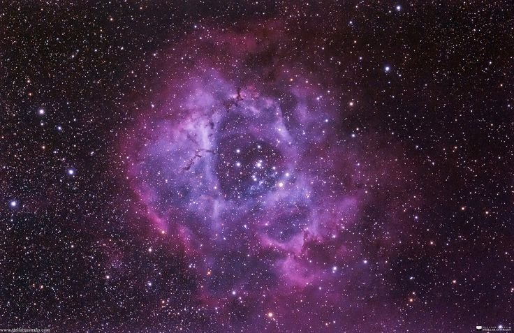 """""""Rose of Heaven"""" by Will Vrbasso.  This is my image of the Rosette Nebula taken a couple of nights ago. This nebula is around 5000ly from earth, and is a haven for new born stars. Whilst the cluster of stars is easily visible with binoculars, the nebula itself can only be viewed with long exposure photography."""