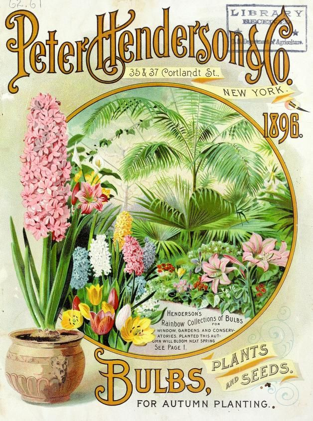 Beautiful front cover of Peter Henderson's Autumn Bulb Catalogue dated 1896 with an illustration of Henderson's 'Rainbow Collections of Bulbs.' Peter Henderson & Co. 35 & 37 Cortland Street. New York. U.S. Department of Agriculture, National Agricultural Libraryarchive.org