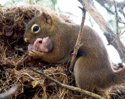 The Kindness of Squirrels:  adoption