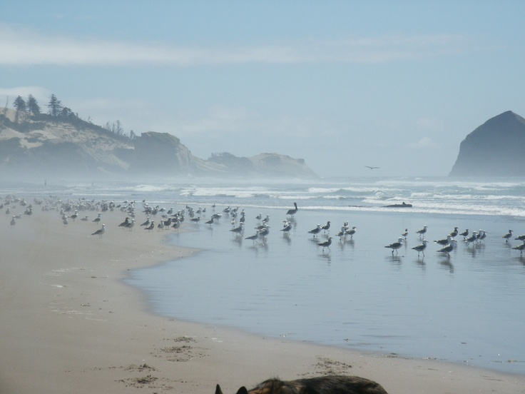 view of Cape Kiwanda from Tierra Del Mar OR