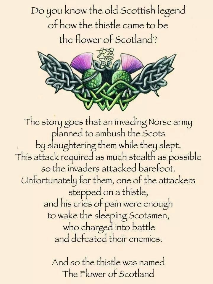 Torn between Viking heritage and Scottish heritage....