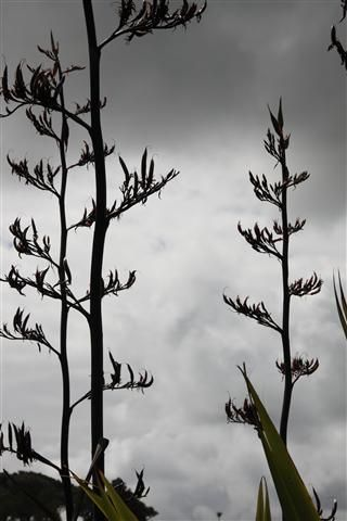 flax-1e-small.jpg (320×480)